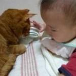 眠いけど優しく付き添うネコちゃん!