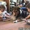 かわいい犬が赤ちゃんを子守り!