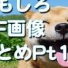 【笑ったら負け】マジで笑える面白いハプニング動画集7!海外爆笑映像!