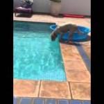 プールの中にあるボールを驚きの方法でゲットするワンちゃん!