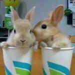 コップに入った2匹の子ウサギが可愛すぎる!