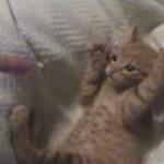 「撃つぞ!手をあげろ!」子ネコちゃんの反応が可愛すぎる!