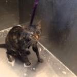 猫が入浴中に喋り出した!?