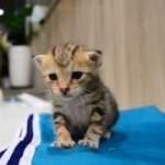 眠気でフラフラの子猫ちゃんが可愛すぎて癒されるーーー!!