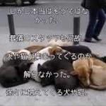 【感動不思議】動物たちに優しかった女性の葬儀で起きた奇跡