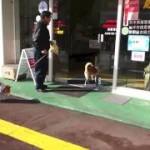 犬専用の自動ドアボタンが可愛いw
