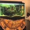 お魚を取る方法を考える猫。