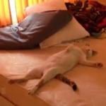 寝室を占領する猫ちゃんが人っぽくて笑えるw