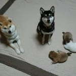 子犬ピンチにパパどーする!?