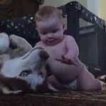 ワンちゃんを撫でたい赤ちゃん!