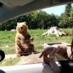 大きなクマさんのおもてなし!