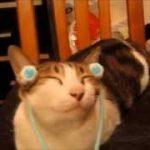 【かわいい!面白い!動物動画】アニマル系ほっこりムービー
