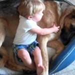 眠たいワンちゃんと遊びたい男の子