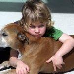 【涙腺崩壊】犬の安楽死に立ち会った六歳の男の子の言葉が凄すぎる